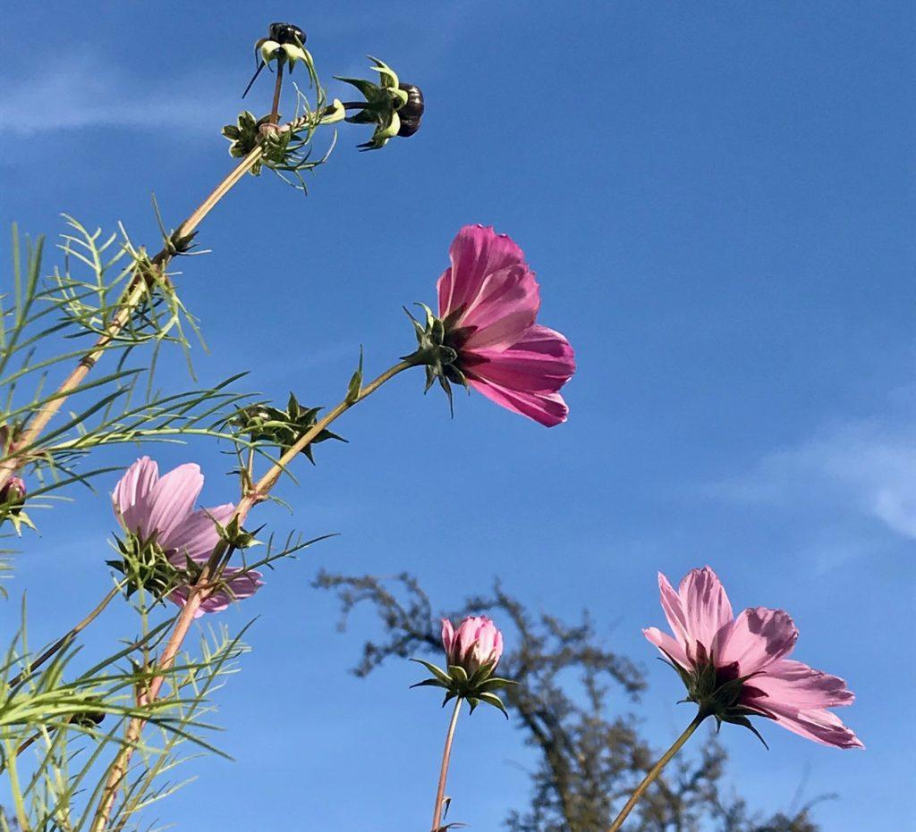 Blühende Blumen und Himmel
